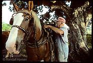 32: RHINELAND FARMER, DRAFT TEAM