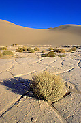 Morning light on playa and sagebrush at the Mesquite Flat Sand Dunes, Death Valley National Park, California USA