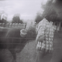 1. When was this photo taken?<br /> <br /> October 2011<br /> <br /> 2. Where was this photo taken?<br /> <br /> Rockhill Creamery Farm in Richmond, UT<br /> <br /> 3. Who took this photo?<br /> <br /> I did.<br /> <br /> 4. What are we looking at here?<br /> <br /> This is an exboyfriend and a cow. haha. We had gone up to Rockhill Creamery (Farm) for the weekend to visit a friend who was working there. We had a lovely time exploring the farm, meeting all the cows, and having a delicious meal in the barn.<br /> <br /> 5. How does this old photo make you feel?<br /> <br /> This feels like a lifetime ago! Looking through these forgotten photos flooded me with a rush of emotions, they brought back so many memories and adventures.<br /> <br /> 6. Is this what you expected to see?<br /> <br /> I had no idea what was going to be on this old roll of film that was still in my Holga camera. I didn't know how many years old the photos would be, but I assumed there would probably <br /> <br /> 7. What kind of memories does this photo bring back?<br /> <br /> This photo brings back some really great memories with this exboyfriend. While we are both in better places now, we had many years of fun and adventure together, which I look back on fondly.<br /> <br /> 8. How do you think others will respond to this photo?<br /> <br /> Because of the Holga photo, the black and white film, the lighting, and probably the fact that the film is quite old, the whole photo looks quite blurry. While others may just see a blurry cow and man, I see a long-ago adventure with a long-lost love.