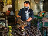 Poultry in Khlong Toei Market
