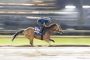November 1-3, 2018: Breeders' Cup Horse Racing World Championships. Golden Mischief