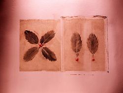 still life polaroid transfer leaves leaf prints form 12 twelve roman numeral XII copy space CONCEPT STOCK PHOTOS CONCEPT STOCK PHOTOS