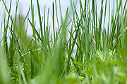 extreme close up of grass