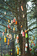 Carved foam buoys hang from a tree at Michigan Creek camp, West Coast Trail, British Columbia, Canada.