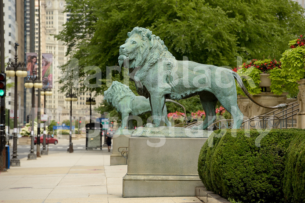 The Art Institute of Chicago lion statutes along Michigan Avenue in Chicago, Illinois.<br /> Photo by Mark Black