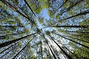© Filippo Alfero<br /> Rifugio Daniele Arlaud, Montagne Seu, Parco Naturale Gran Bosco<br /> Salbertrand (TO), 26/06/2013