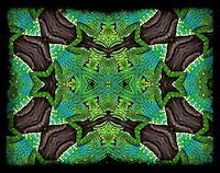 Anglehead Lizard