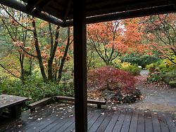 United States, Washington, Bellevue, Bellevue Botanical Garden