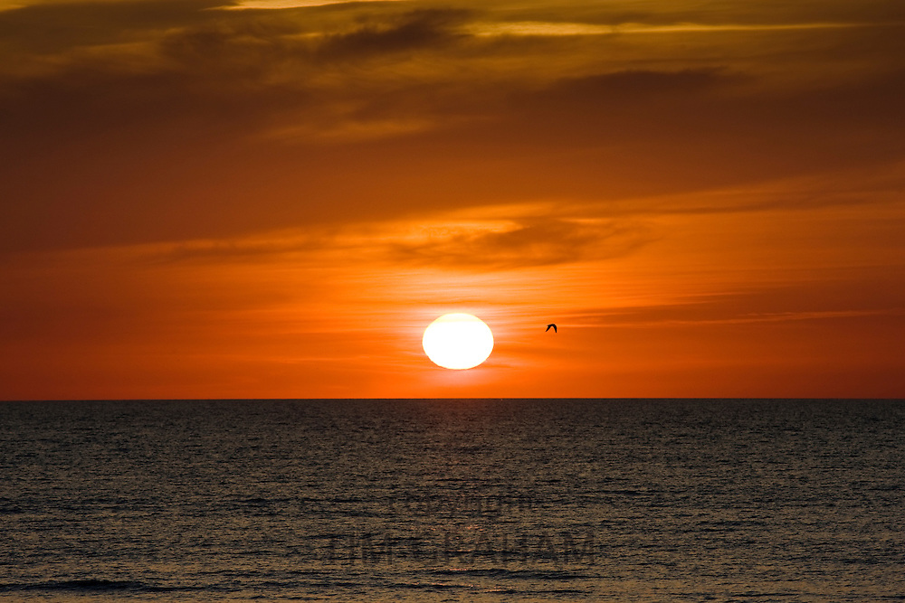 Lone bird flies at sunset over the Gulf of Mexico from Anna Maria Island, Florida, United States of America