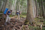 Climbers (l-r) Obadiah Reid and Jim Prager hike through forest along the Wedgemount Lake Trail in Garibaldi Provincial Park, British Columbia, Canada on June 13, 2009.