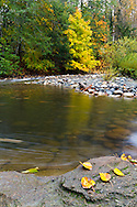 Fall leaves on the shore of the Englishman River at Englishman River Regional Park in the Nanaimo Regional District, British Columbia, Canada