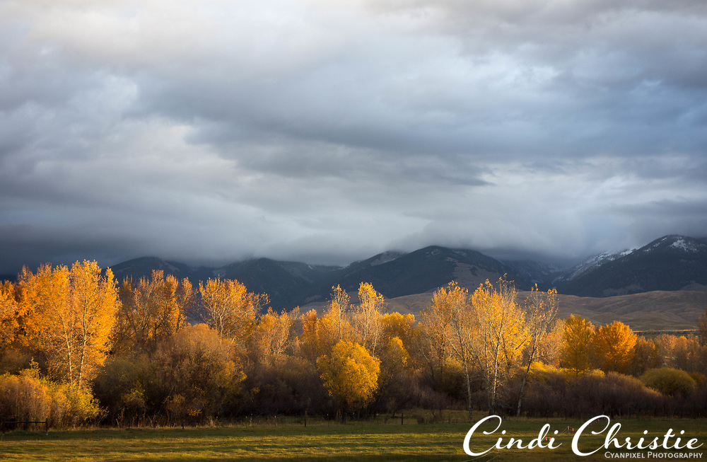 Sunrise makes the autumn leaves glow in Salmon, Idaho, on Oct. 22, 2016. (© 2016 Cindi Christie)