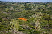 Coro_VE, Venezuela...Parque Nacional dos Medanos de Coro no Estado Falcon na Venezuela...Medanos de Coro National Park in Falcon state in Venezuela...Foto: JOAO MARCOS ROSA / NITRO
