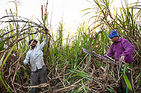 Kawakawa, near Labasa, Fiji | 2011<br /> Descendants of indentured laborers who came from India in the late nineteenth and early twentieth centuries, Roop Narayan and Basant Kumar cut sugar cane as members of Gang 12 of the Labasa Mill. Colonial-era laws prevent Indo-Fijians from owning land, so they must lease their holdings from native Fijian landlords and work as tenant farmers.