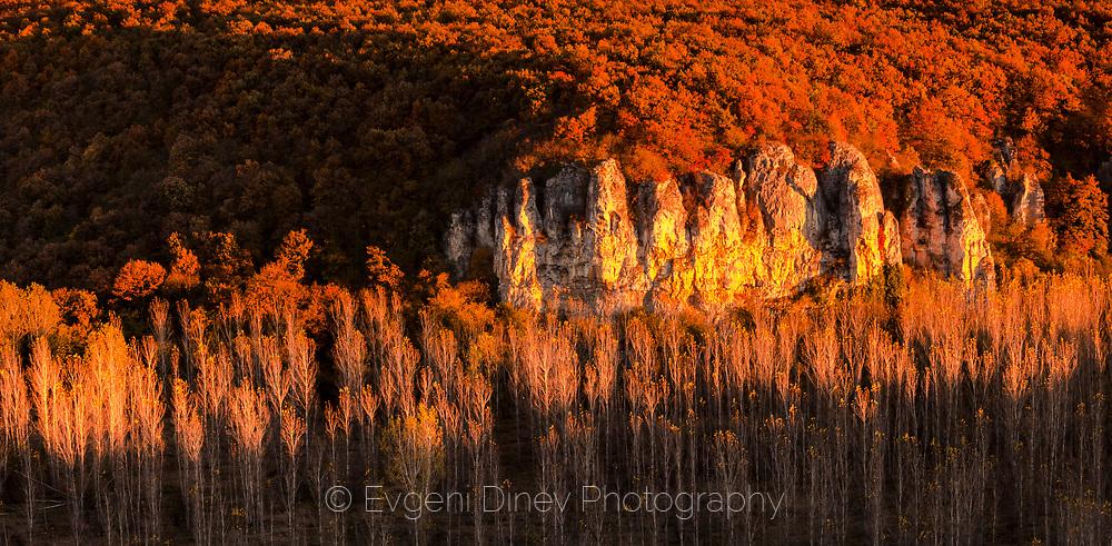 Poplar forest along Vit river in autumn sunset
