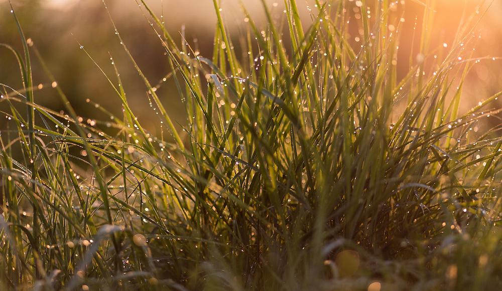 http://Duncan.co/morning-dew-on-grass