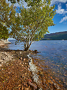 A lonely tree on the edge of the rocky bank of a loch.<br /> Scotland, UK