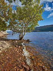 A lonely tree on the edge of the rocky bank of a loch.<br />