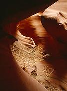 Tumbleweed resting between the convoluted walls of Lower Antelope Canyon, Navajo Reservation, Arizona.