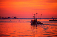 Annapolis, Maryland-- Workboats leave the safe harbor of Spa creek at the mouth of the Severn River and the Chesapeake Bay in the early winter morning. The winter months are the best time of year to harvest oysters fromChesapeake Bay despite the fridgid tempatures.