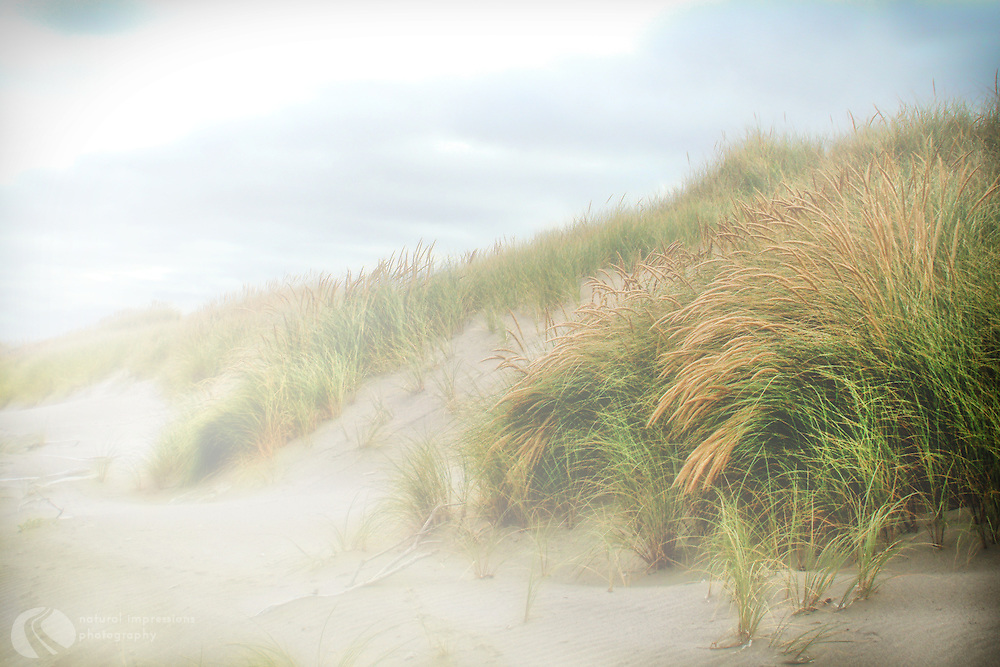 Fog rolls in over beach grass along the shoreline near Bandon, Oregon.