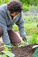 lady digging in allotment