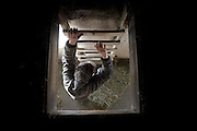 Craig Wortman climbs down from the hay loft after retrieving several bales of hay to feed the cows during his morning barn routine in South Randolph, Vt. Wednesday, April 13, 2016. (Valley News - James M. Patterson) Copyright Valley News. May not be reprinted or used online without permission. Send requests to permission@vnews.com.