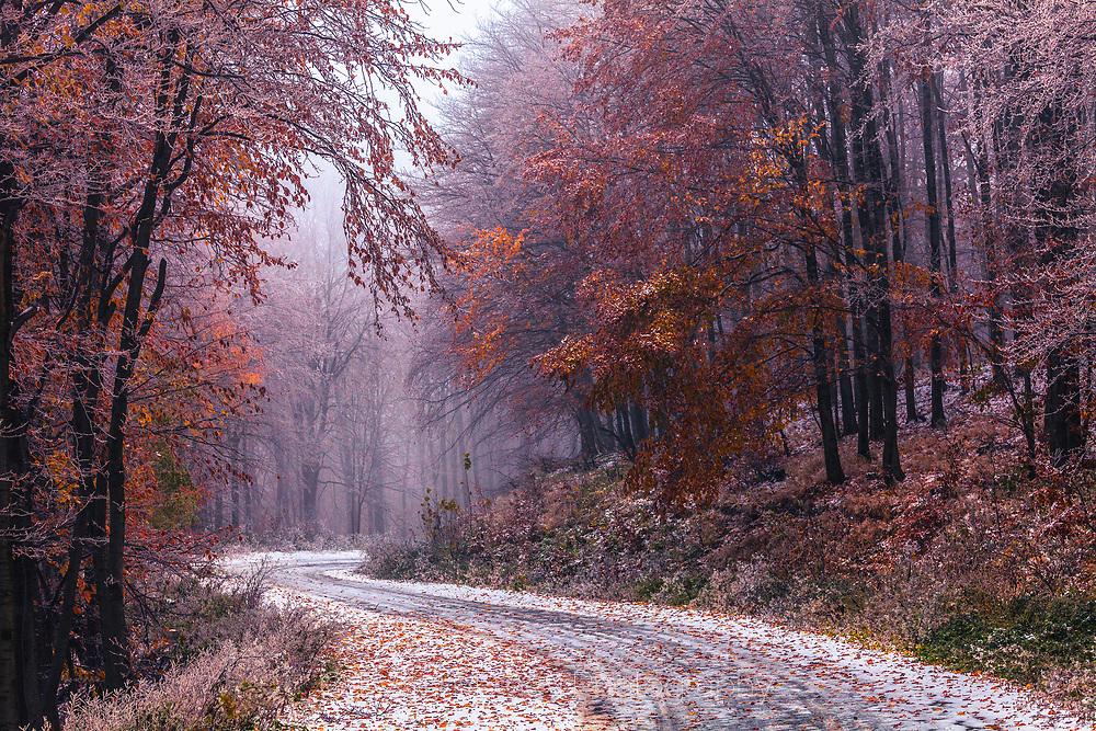 Frosty road across a misty autumn forest