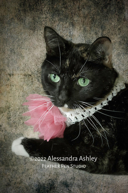Portrait of Addie, green-eyed tortoise-shell rescue cat wearing floral collar.