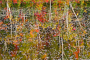 autumn colored trees reflected in waters of pond<br /> Haydn<br /> Ontario<br /> Canada