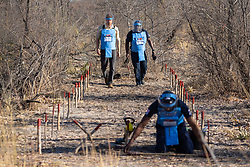 The Duke of Sussex and Halo Regional Manager Jose Antonio (right) watch as Mine Clearer Jorge Joao Cativa (foreground) demonstrates mine clearing techniques at a minefield in Dirico, Angola, during a visit to see the work of landmine clearance charity the Halo Trust. on day five of the royal tour of Africa.