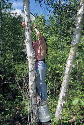 Jodi Yeager Putting Bacon On Tree
