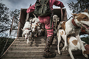 """Nelson Cristeta loosing his pack of hunting dogs in the beginning of the hunt. November 2013 © Antonio Pedrosa.<br /> <br /> """"The Pose and the Prey""""<br /> <br /> Hunting in my imagination was always more like taxidermy — as if the prey was just a mere accessory of the hunter's pose for his heroic photograph — the real trophy.<br /> <br /> When I decided to document the daily lives of Portuguese hunters, I had in my memory the """"cliché"""" from the photographer José Augusto da Cunha Moraes, captured during a hippopotamus hunt in the River Zaire, Angola, and published in 1882 in the album Africa Occidental. The white hunter posed at the center of the photograph, with his rifle, surrounded by the local tribe.<br /> <br /> It was with this cliché in mind that I went to Alentejo, south of Portugal, in search of the contemporary hunters. For several months I saw deer, wild boar, foxes. I photographed popular hunting and private hunting estates, wealthy and middle class hunters, meat hunters and trophy hunters. I photographed those who live from hunting and those who see it as a hobby for a few weekends during the year. I followed the different times and moments of a hunt, in between the prey and the pose, wine and blood, the crack of gunfire and the murmur of the fields .<br /> <br /> I was lucky, I heard lots of hunting stories. I found an essentially old male population, where young people are a minority. Hunters, a threatened species by aging and loss of economic power caused by the crisis in the South of Europe.<br /> <br /> The result of this project is this series of contemporary images, distant from the """"cliche"""" of 1882.<br /> <br /> — Antonio Pedrosa"""