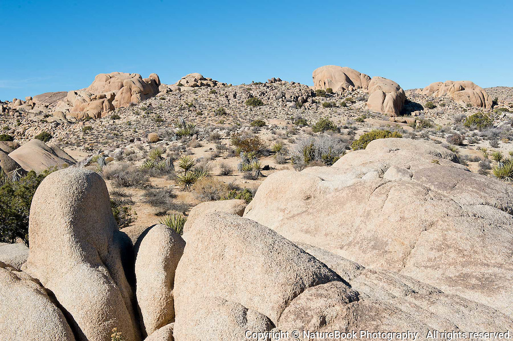 A warm day at Joshua Tree National Park in California.
