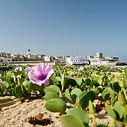 Oman Dhofar