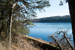 First Day of Spring 2016 around  langsett reservoir on the edge of the Peak district <br />  20 March 2016<br />  Copyright Paul David Drabble<br />  www.pauldaviddrabble.co.uk