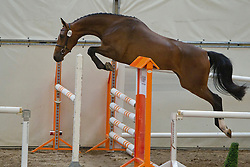 89 - Daniella<br /> KWPN Paardendagen 2011 - Ermelo 2011<br /> © Dirk Caremans
