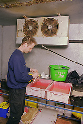 Man filling plastic bag with maggots from plastic tray,