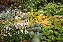 Winning plant display at Newark Show 2009