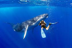 photographer and humpback whale, Megaptera novaeangliae, Hawaii, USA, Pacific Ocean, MR