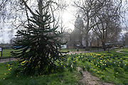 Gardens in the Spring outside the Imperial War Museum on 5th March 2021 in London, England, United Kingdom.