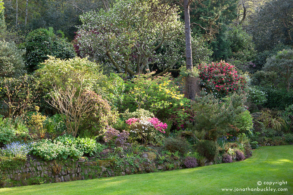 Main borders in the garden near the house at Greencombe Gardens, Porlock with rhododendrons and azaleas