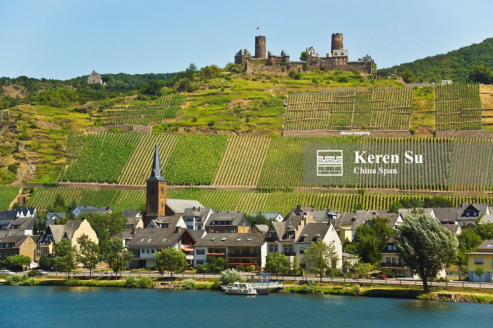 Burg Thurant on top, vineyard along the Moselle River, Alkener Burgberg, Germany