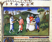 Marco Polo (1254-1324) Venetian traveller. Dog-headed men from the Isle of Agaman, Gulf of Bengal. 'Book of Marvels'. Early 15th century manuscript illustrated by Masters Boucicaut and Bedford.