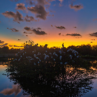 South Florida landscape photography from nature photographer Juergen Roth showing the waterscape of Wakodahatchee Wetlands in magical sunrise light. Wako is an amazing nature area for viewing and photographing birds and other wildlife in Florida. <br /> <br /> Florida nature photography images are available as museum quality photo prints, canvas prints, wood prints, acrylic prints or metal prints. Fine art prints may be framed and matted to the individual liking and interior design room project needs:<br /> <br /> https://juergen-roth.pixels.com/featured/wakodahatchee-wetlands-sunrise-and-birds-juergen-roth.html<br /> <br /> All Florida nature photography images are available for photography image licensing at www.RothGalleries.com. Please contact me direct with any questions or request.<br /> <br /> Good light and happy photo making!<br /> <br /> My best,<br /> <br /> Juergen<br /> Prints: http://www.rothgalleries.com<br /> Photo Blog: http://whereintheworldisjuergen.blogspot.com<br /> Instagram: https://www.instagram.com/rothgalleries<br /> Twitter: https://twitter.com/naturefineart<br /> Facebook: https://www.facebook.com/naturefineart