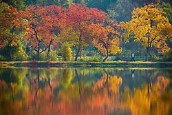 November 1, 2018 - Nanjing, Nanjing, China - Nanjing,CHINA-Aerial photography of Zhongshan Botanical Garden in Nanjing, east China's Jiangsu Province. (Credit Image: © SIPA Asia via ZUMA Wire)
