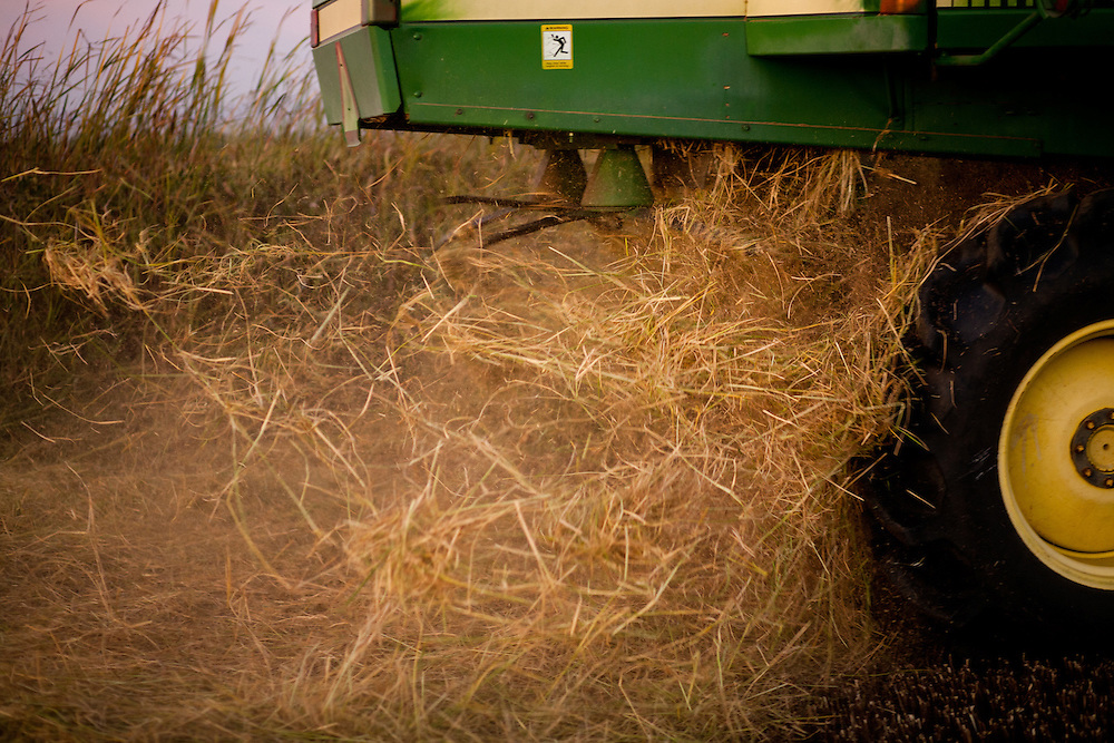 Charlie Mathews harvests rice on his family's land in Yuba county. Yuba county rice harvest was valued at $38.7 million in 2016.