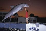 bottlenose dolphin, Tursiops truncatus. jumps for trainer, Ocean World, Ft. Lauderdale, Florida, USA<br /> (no longer in operation)