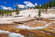 The Tuolumne River, Tuolumne Meadows area, Yosemite National Park, California