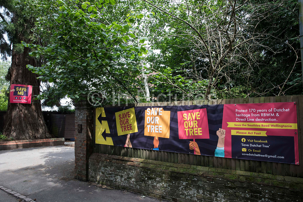 Banners for the Save Datchet Tree campaign are pictured on 1st July 2021 in Datchet, United Kingdom. Local residents and councillors have been campaigning to save a Wellingtonia or Giant sequoia tree (pictured left), thought to be 150-175 years old and included in the Woodland Trust's Ancient Tree Inventory, since an application was made for its removal by the owners of an adjoining property. Although permission for its removal has been granted by the Royal Borough of Windsor and Maidenhead as a result of a subsidence issue, alternative solutions continue to be examined by the parties involved.